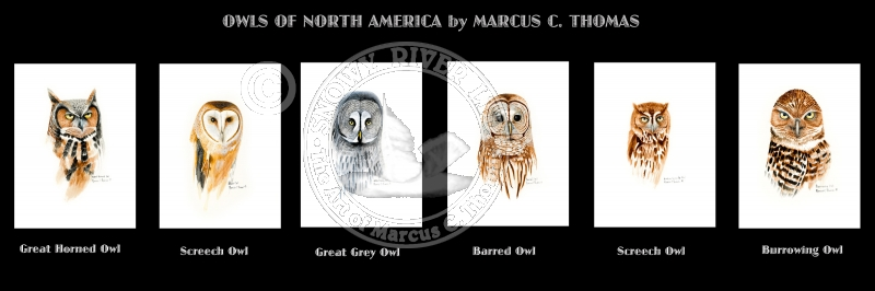 New Series - Owls of North America