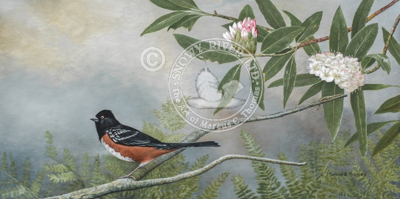 Rufuos Towhee - Rhododendron
