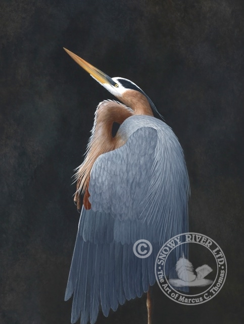 The Dancer - Great Blue Heron